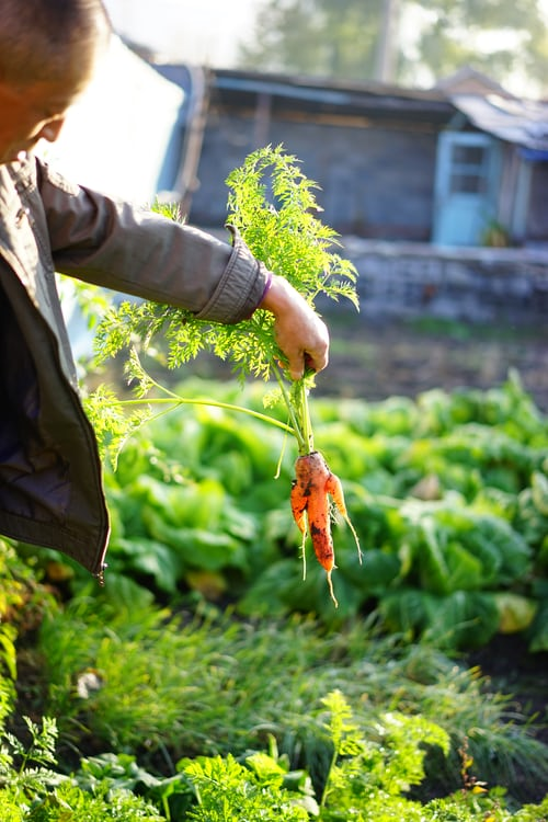 The Zen of Gardening